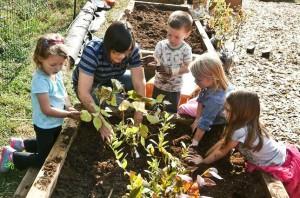 Linwood planting