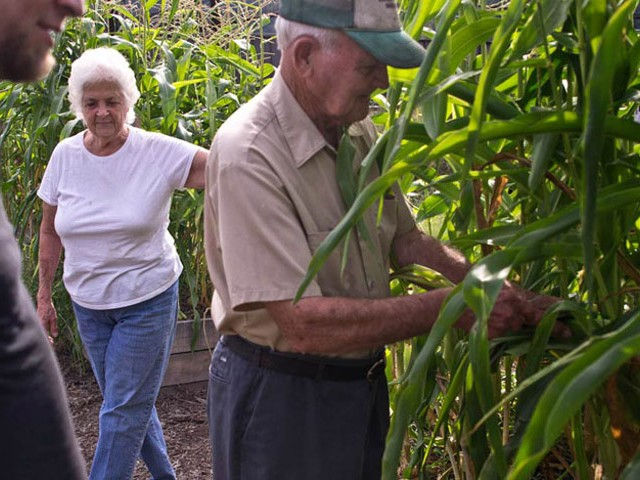 Plant community gardens